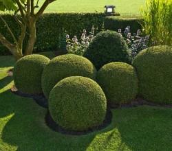 Buxkugeln auf englischem Rasen