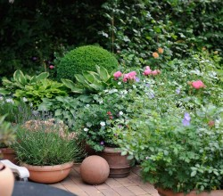 gepflasterte Terrasse mit Blumenkübeln