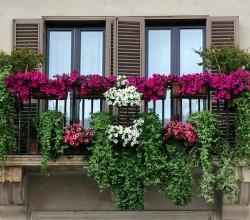 Balkon mit bunten Blumen