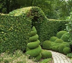 Große Hecke mit spiralförmigem Buxbaum