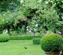 Rasen perfekt gepflegt im englischen Garten