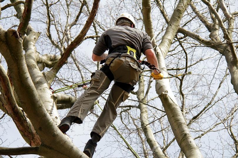 Baumpfleger im Klettergurtzeug
