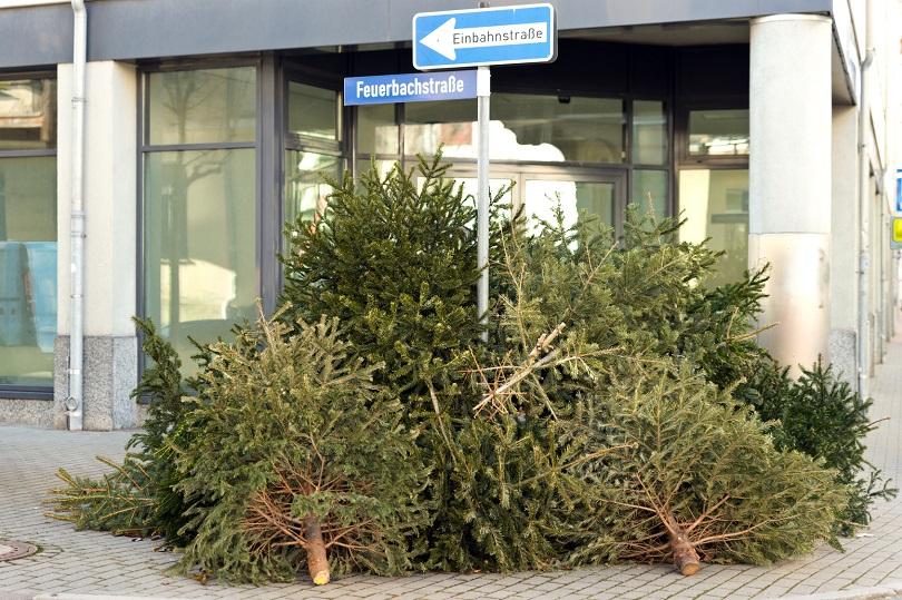 Weihnachtsbaum mit wurzel hamburg