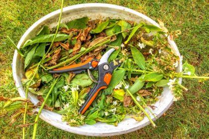 Eimer mit Gartenschere und Schnittgut