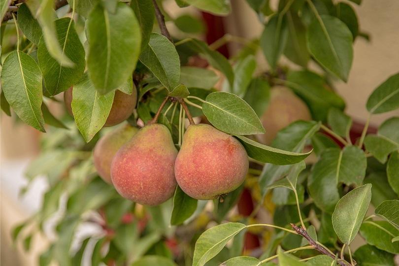 Berühmt Obstbäume veredeln |Tipps von Meister & Meister #CP_92