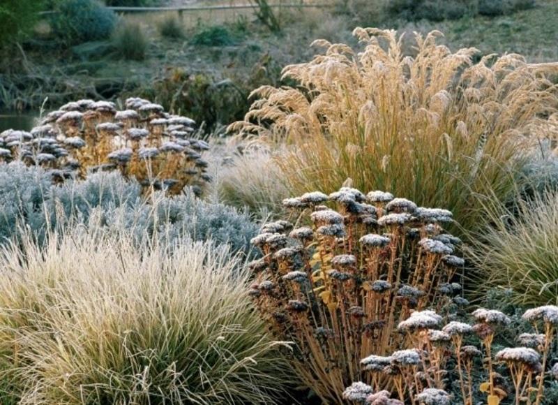 Ziergräser im winterlichen Garten