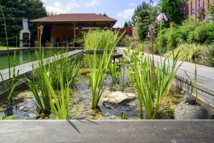Wasserpflanzen im Garten