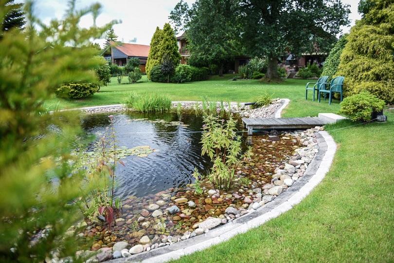 Wasserpflanzen - Teich